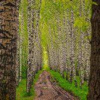 Дорога в светлое будущее :: Виктор Выдрин