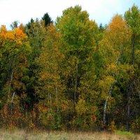 Осень :: Chera -