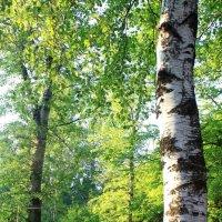 Forest :: Юлия Золотаренко