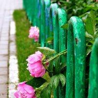 ...после дождя... :: Ольга Нарышкова