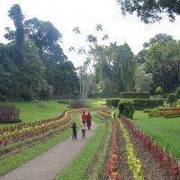 В ботаническом саду. Канди, Шри Ланка :: svk
