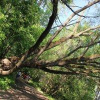 """вечно """"падающее"""" дерево :: Ильмира Хафизова"""