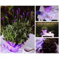 Lavender Summer :: Lana Zhukova