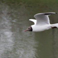 Чайка :: Caba Nova