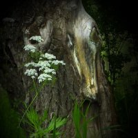 Встреча в лесу :: Валерий Талашов