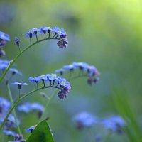 Весенние цветы :: Виктор Рыбаков