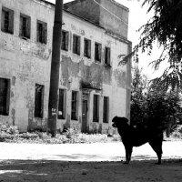 Собачье :: Андрей Степуленко