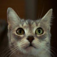 *Кошка* :: Елисей Львов