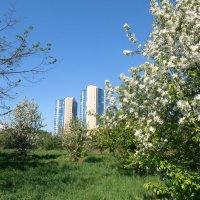 Городской пейзаж :: Марина Ильина