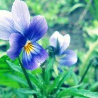 Цветочек :: Tania Govorukhina