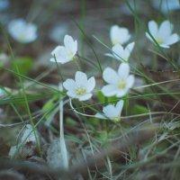 Маленькие принцессы :: Ksenia Crocker