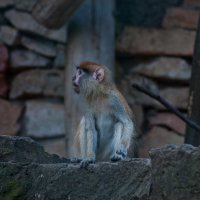 Zoo in Riga :: WASS LV