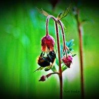 природа :: Nati Tonkin