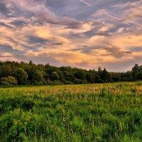 Лес на закате :: Андрей Куприянов