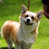 Собака-улыбака :) :: Маруся Верведа