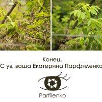 4 :: Екатерина Парфиленко