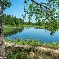 Небольшое озеро по дороге в Дунилово :: Валерий Смирнов