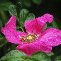 После дождя... :: Евгеша Сафронова