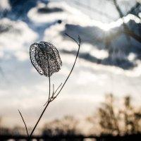 Зима. Стремление к солнцу! :: Alexandr Uvarov