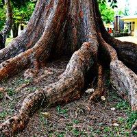 Мать тропикано. :: Поток