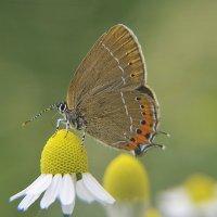Summer Butterfly... :: Вика К.