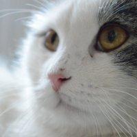 Кот по имени Кот :: Полинка Шаленкова