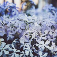 violet :: Alina Nechepurenko