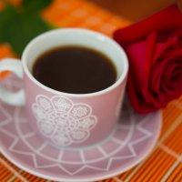 цветок розы :: Анастасия Садовская