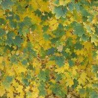 щаслива осінь :: Ольга