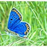 бабочка :: Viktoriya Bilan