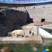 Зоопарк, Питер :: Надежда Элпис