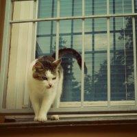 Кот и решетка :: Виктория Альшанец