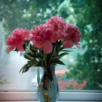 Пионы и дождь. :: Снежанна Родионова
