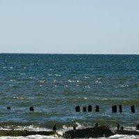 Чайки Балтийского моря :: Ирина Шарапова