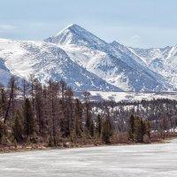 озеро Киделю перед Улаганским перевалом. :: Галина Шепелева