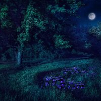 Летняя ночь :: Boris Belocerkovskij