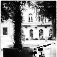 В Париже даже велосипеды парами :: Vladimir Zhavoronkov