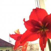 Весенний расвет :: Александр Мандрика
