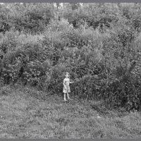 Стихия травы :: Алексей Хвастунов