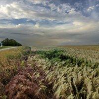 В поле :: Валерий Наумов