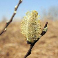 а вот и весна... :: Игорь Чичиль