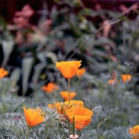 Цветы :: Анна Демьяненко