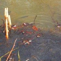 Много лягушек - к чему это? Работа  Натана и Саши. :: Фотогруппа Весна.