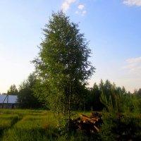 В деревне :: Катя Бокова