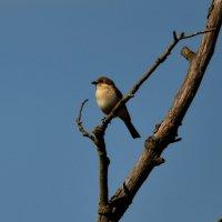 Птаха :: Дмитрий Гончаренко