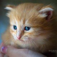 Рыжий котенок :: Юлия Батурина