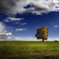 Природа :: Міша Купчак