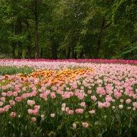 Цветная поляна :: Марина Маслова