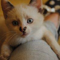Котёнок :: Дарья Лихтар