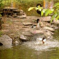 купание в пруду :: Irina